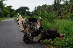 Pohjois-Malesia
